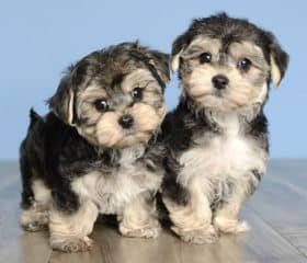 Puppy Store For Sale